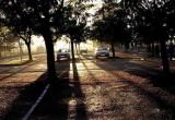 Parking du GRL, du temps de ses beaux arbres
