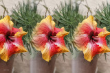 Flower_101318_HDR_1_Texture_AI_Lens_Eff_F_w.jpg