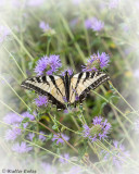 Butterfly_Shipley_Nature_Center_7719_4_CC_AI_Vign_w.jpg