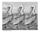Pelican_at_Pier_1014_14_Lens_Effects_Frame_w.jpg