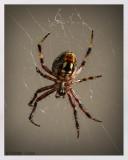 Spider_HB_House_9819_2_CC_S2_w.jpg