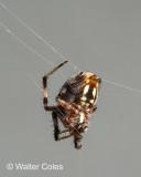 Spider_91619_3_CC_S2_w.jpg