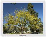 Balboa Park SD 11-14-19 (1) CC S2 Frame w.jpg