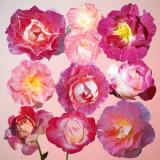 2020 Roses 10 36X36 b2.jpg