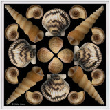 Shells collage 4-27-20 S2 Frame w.jpg