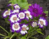 Flowers FE 90 macro 5-25-20 (15) CC S2 w.jpg