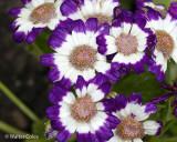 Flowers FE 90 macro 5-25-20 (18) CC S2 w.jpg