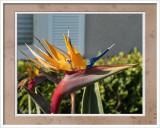 Bird of Paradise 5-20 CC S2 Frame w.jpg