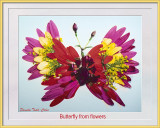 Pams Butterfly from Flowers 2 6-13-20 CC S2 Frame Text w.jpg