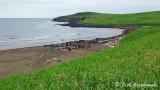St Paul Island seal beach