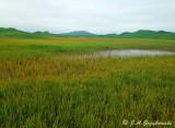 St. Paul Island wetlands