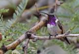 Arizona Birding 2019