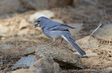 Macaronesia: Canary Islands - Birds and Nature
