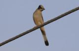 Oman Birds & Nature - February 2020