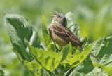 Germany - Birds & Nature