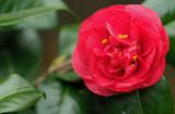 DSCF2125  (Eigen tuin)