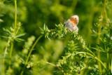 Hooibeestje (Sint-Oedenrode)