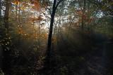 Herfstkleuren (Losser)