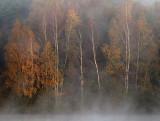 Ochtendmist bij de Oelemars / Misty morning