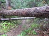 trail15.jpg