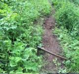 74 - clearing trail.jpg