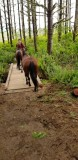 Bunrt Ridge Trail