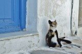 Relaxing in the alleys of Naoussa.