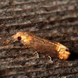 2867-3399 : Olethreutinae - Eucosmini