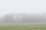 Dis / Haze