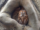 2021 Owls - Uilen