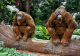 A Wondrous Encounter with the Orangutans