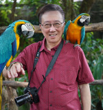 My macaw companions  and me