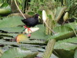Birds of The Gambia