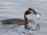 Vogels in en rond Leiderdorp