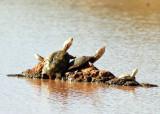 Terrapin, Tortoise & Snakes Ethiopian Somali Region 2018