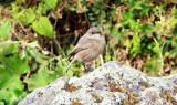 Birds in Ethiopian Somali- and Gondar Regions 2018