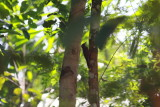 Birds Tropical Brazil 2019
