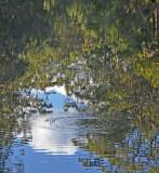 * Walsh River reflections *