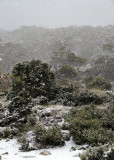 # Tasmania - Mt Field #
