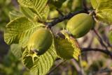 # forest fruit #