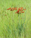 wildflowers & plants
