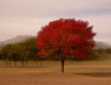 Tree in empty log