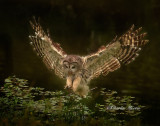 owl_collection