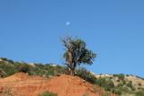 Tree and Moon at Caprock  Canyon