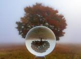 glass ball autumn