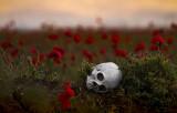 dark poppy field