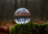 spherical forest