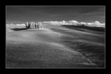 Cipressi di San Quirico d'Orcia