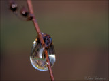druppels_droplets