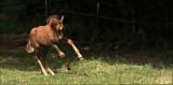 paarden_horses